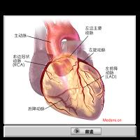 心脏与冠状动脉
