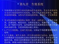 人体科学_俞诗源_9生殖系统