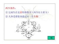 人体寄生虫学_景涛_线虫与部分绦虫电子课件