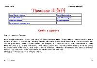 园林树木学_赵九州_Theaceae山茶科