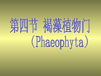 植物学_王幼芳_藻类植物——褐藻门