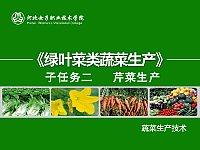 蔬菜生产技术_王振杰_芹菜