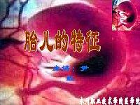 助产学_尹红_胎儿的特征
