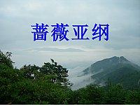 药用植物学概论_刘贤贤_第十七讲蔷薇亚纲